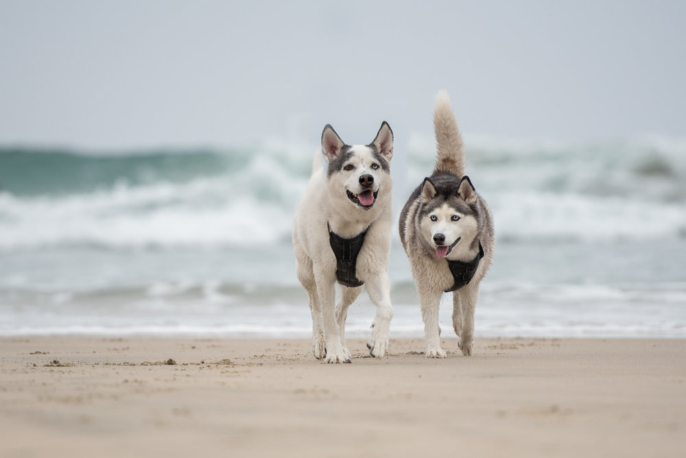 dog photographer in Newport Beach.JPG