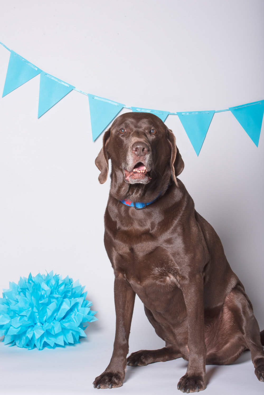 chocolate lab birthday party.JPG