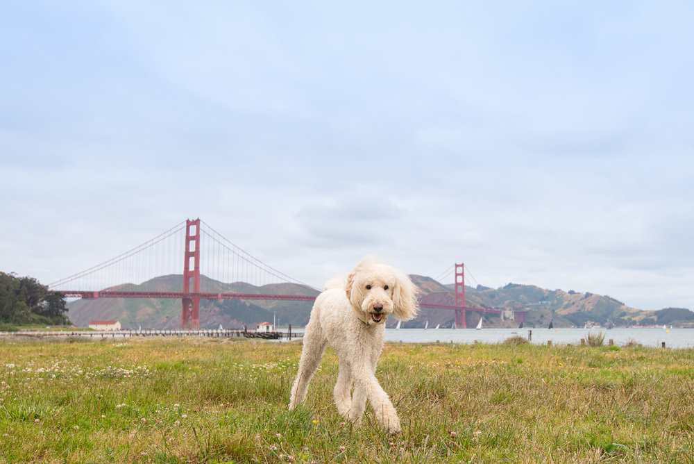 San Francisco Pet Photography.JPG
