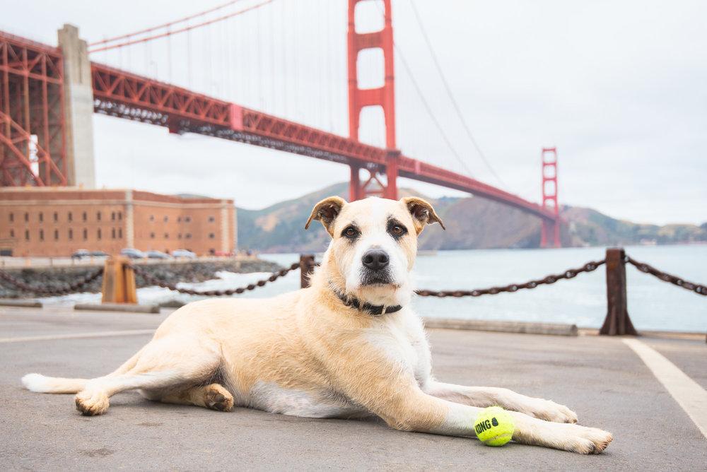 San Francisco Dog Photography.JPG