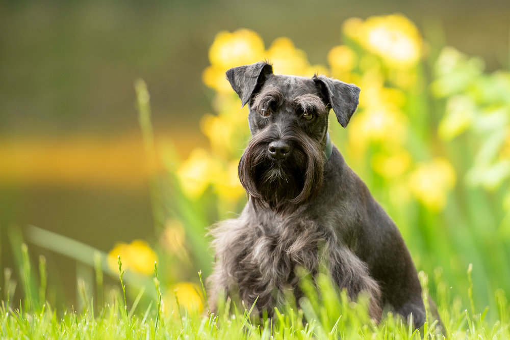 pet photography sessions Charlotte NC.JPG