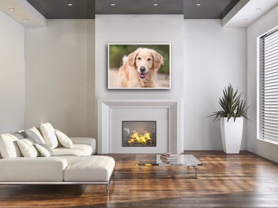framed print dog photo Charlotte NC.JPG