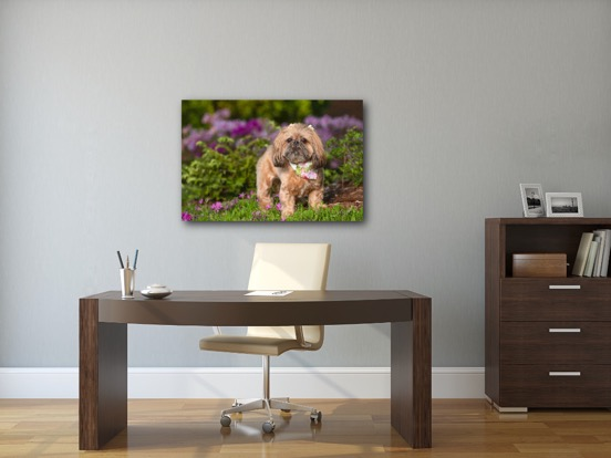 canvas dog photography in Charlotte NC.JPG