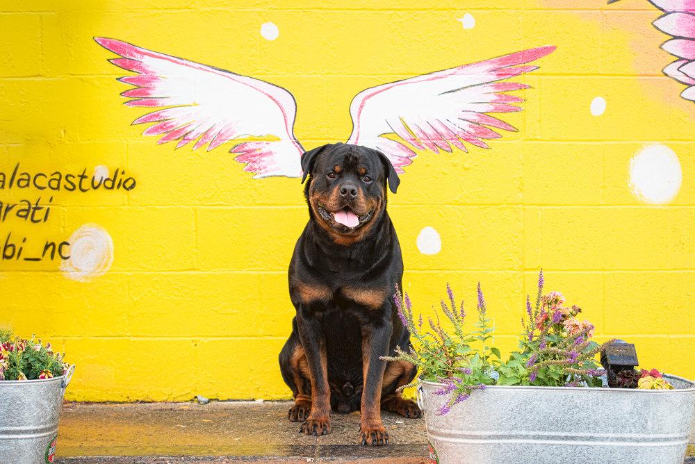 dog photo at Charlotte landmark.JPG