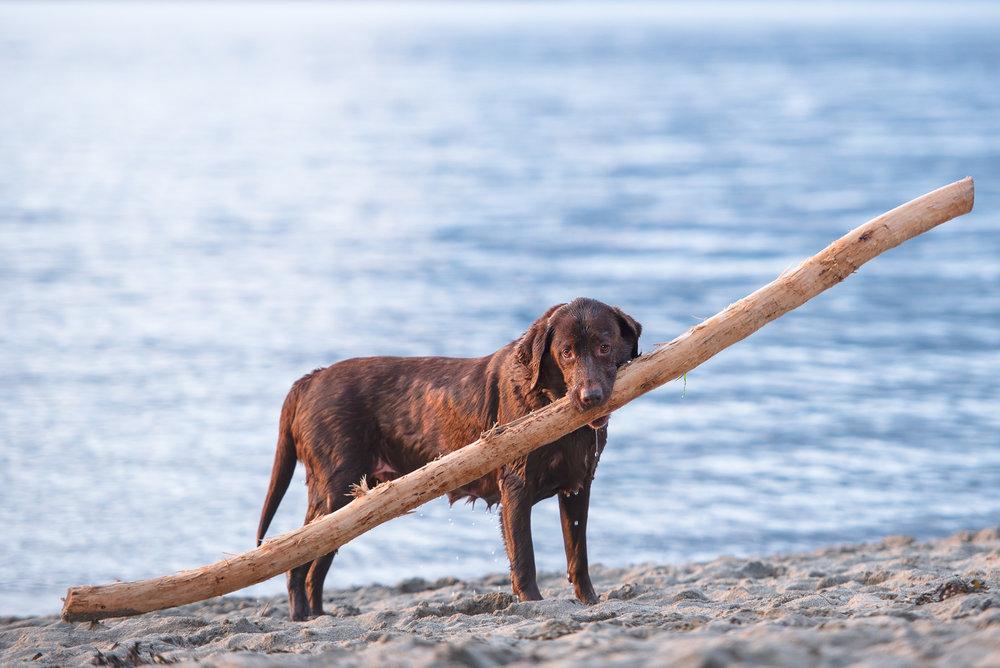 Vancouver dog beach.JPG