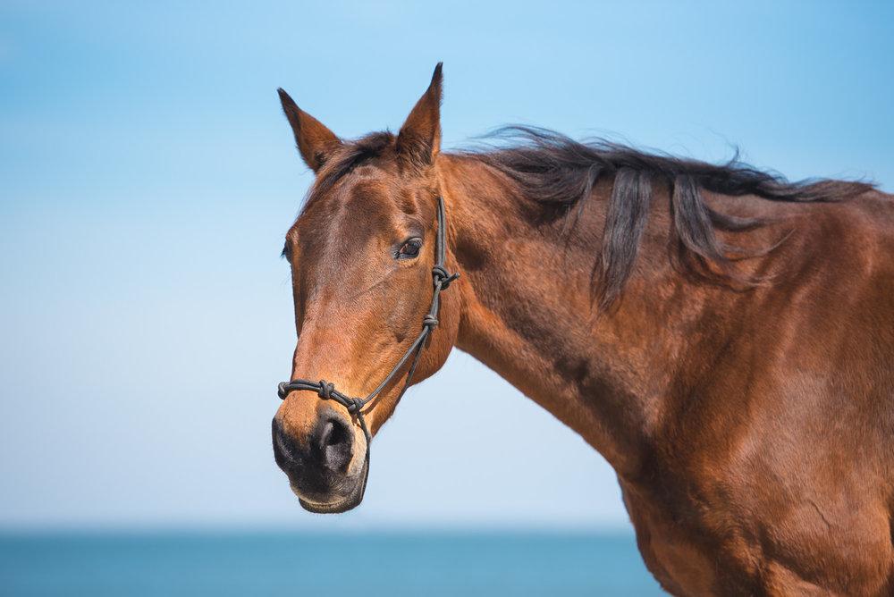 horse photographer near me.JPG