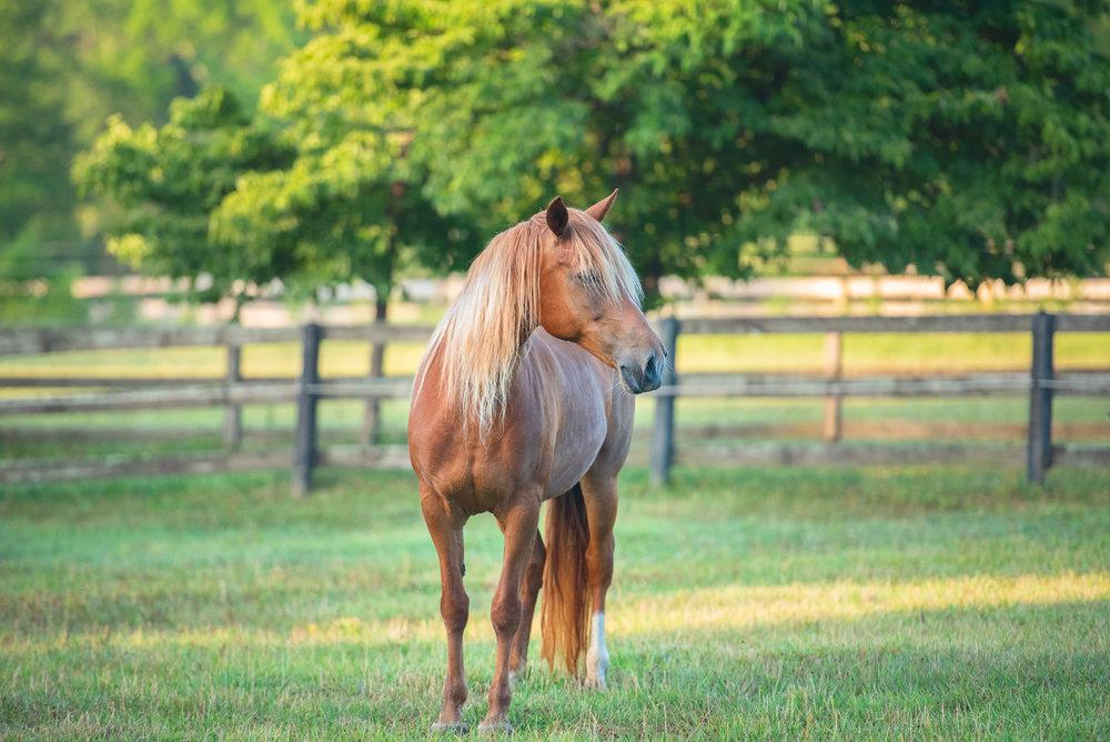 Charlotte NC equine photographer.JPG