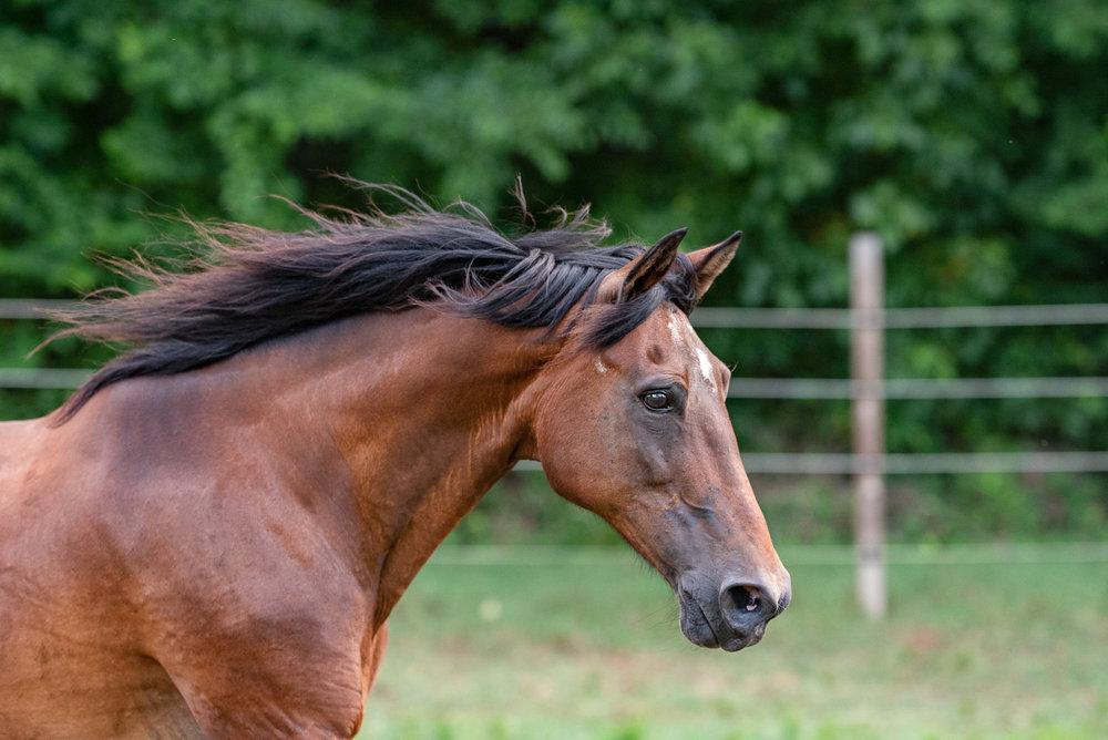 Charlotte NC horse photographer.JPG