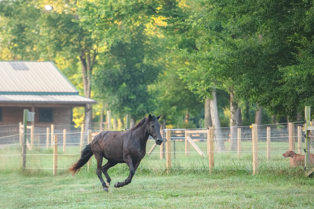Concord NC horse photography.JPG
