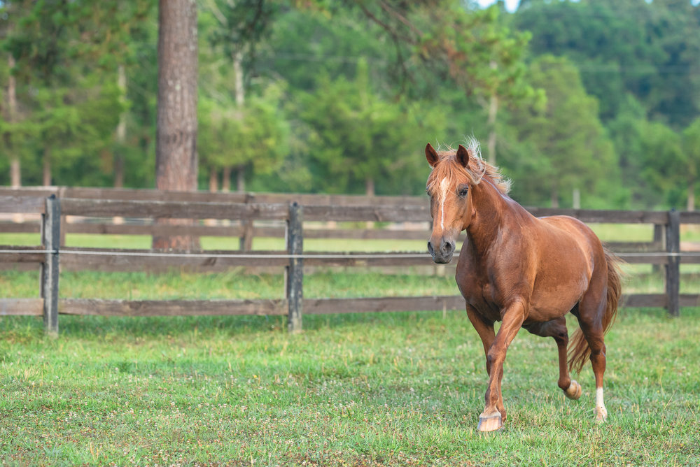 horse photography Charlotte NC.JPG
