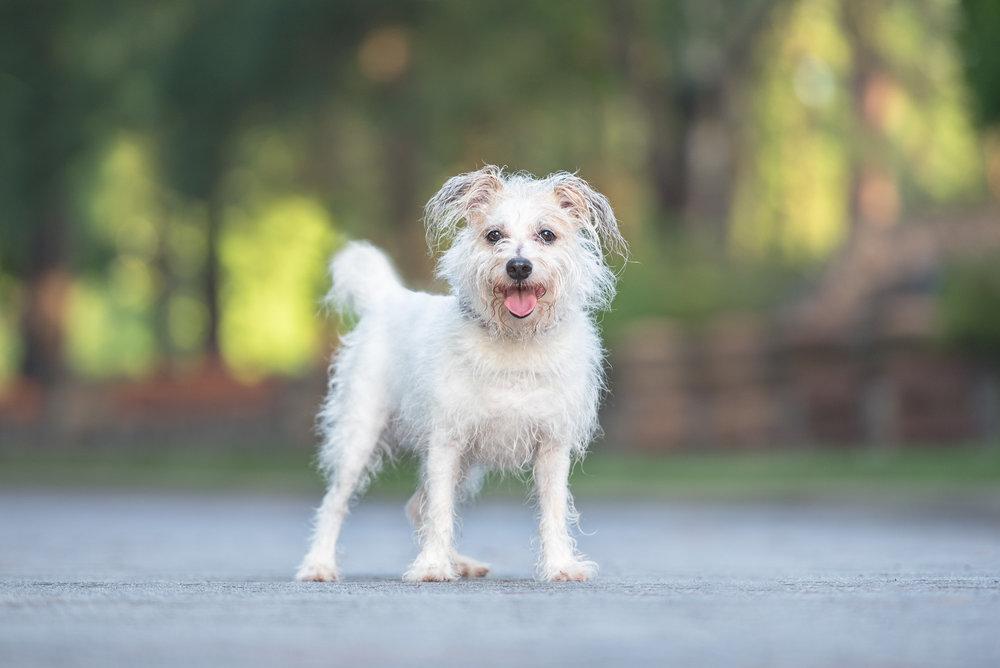 Charlotte NC dog photographer testimonial.JPG