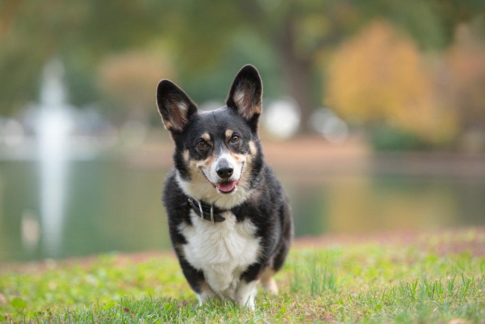 pro dog photography with bokeh.JPG