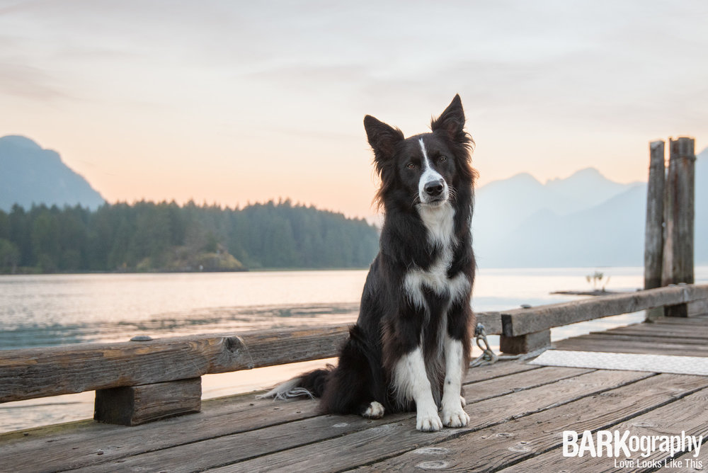 Sunrise Photo with a dog West Vancouver.JPG