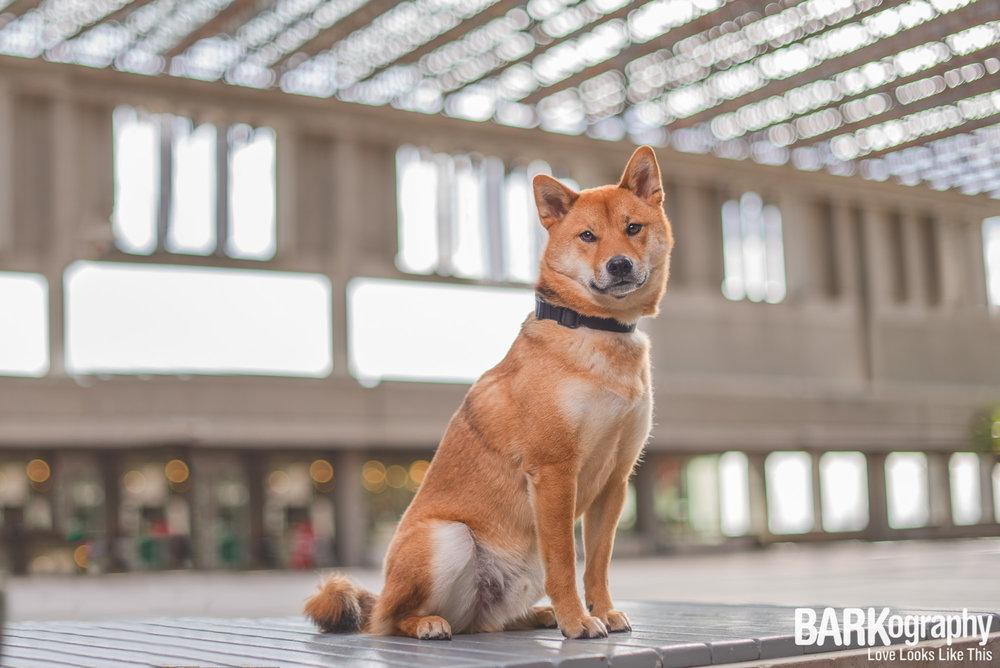 Vancouver dog.JPG