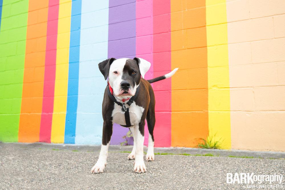 Vancouver Mural Dog Photo.JPG