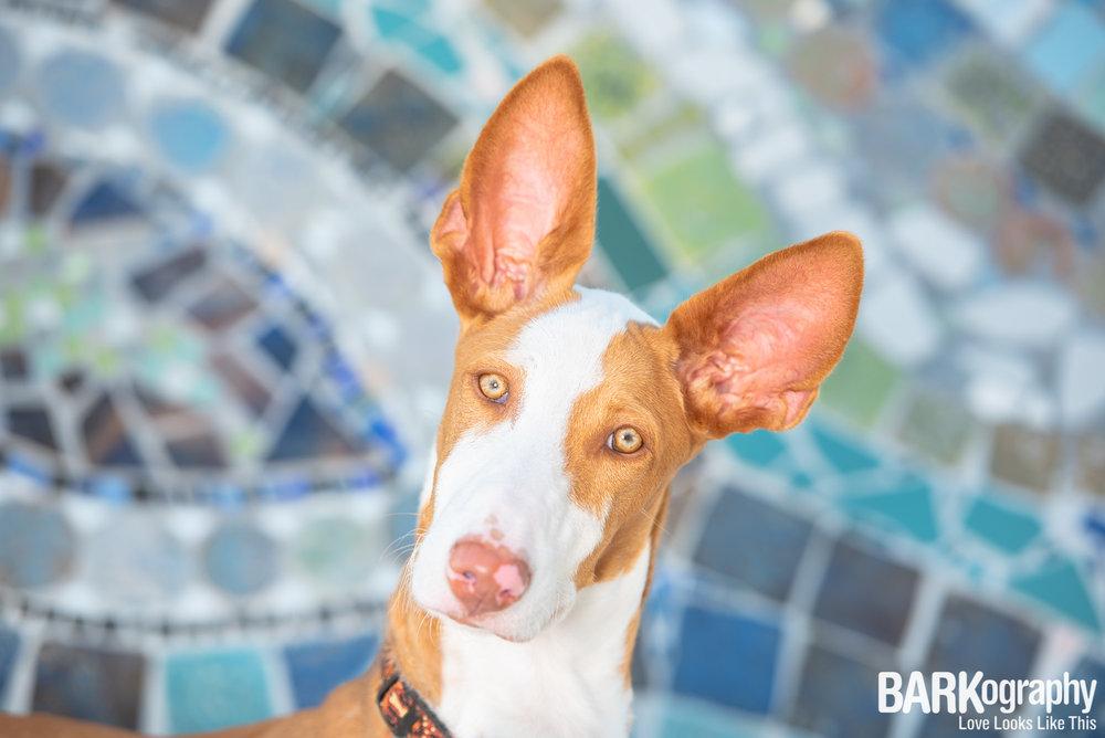Charlotte NC mural dog photo.JPG