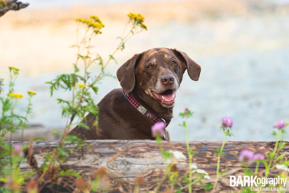 Kits Beach Dog Photo.JPG