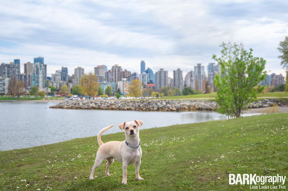 downtown Vancouver Dog Photo.JPG