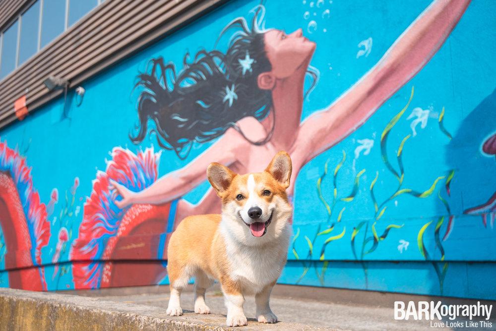 Vancouver Mural Dog Photography.JPG