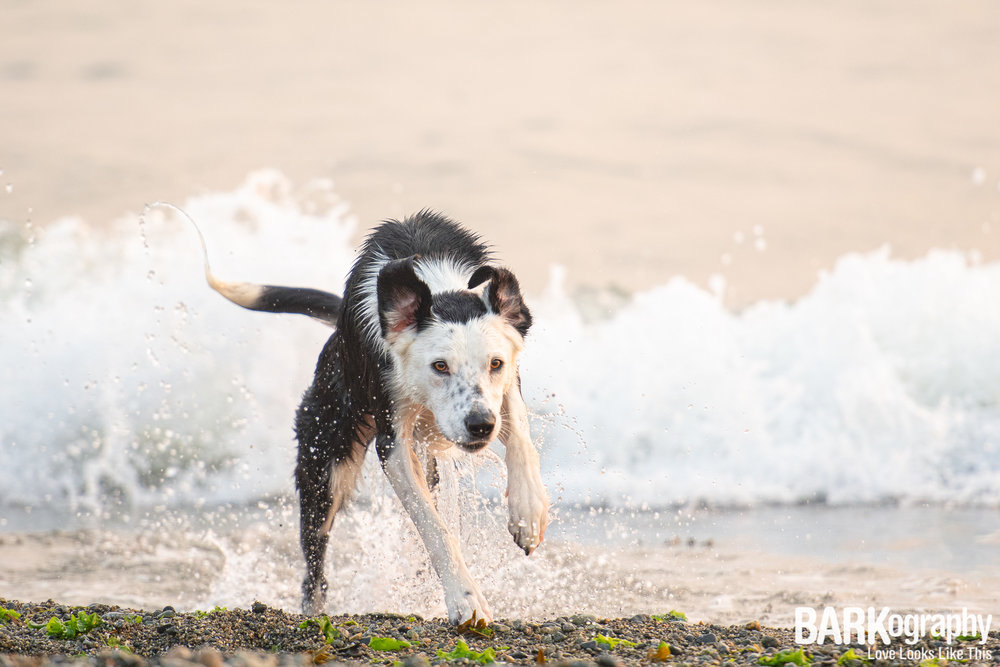 West Vancouver Dog Photography.JPG
