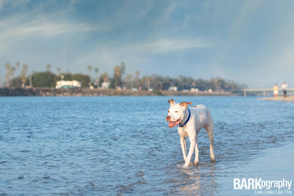 California Dog Photography.JPG