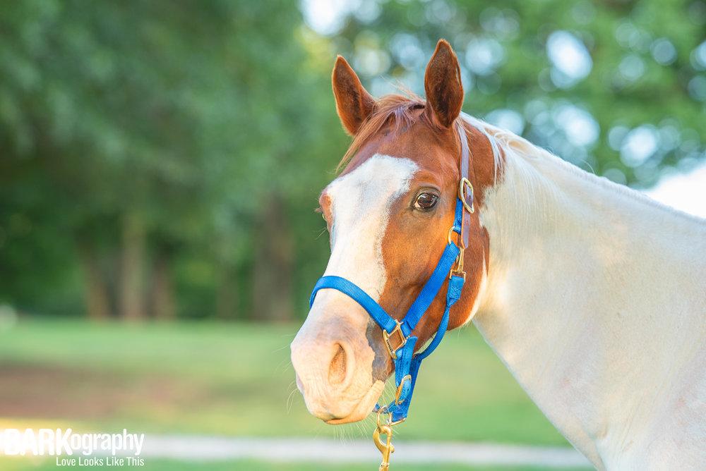 horse photography.JPG