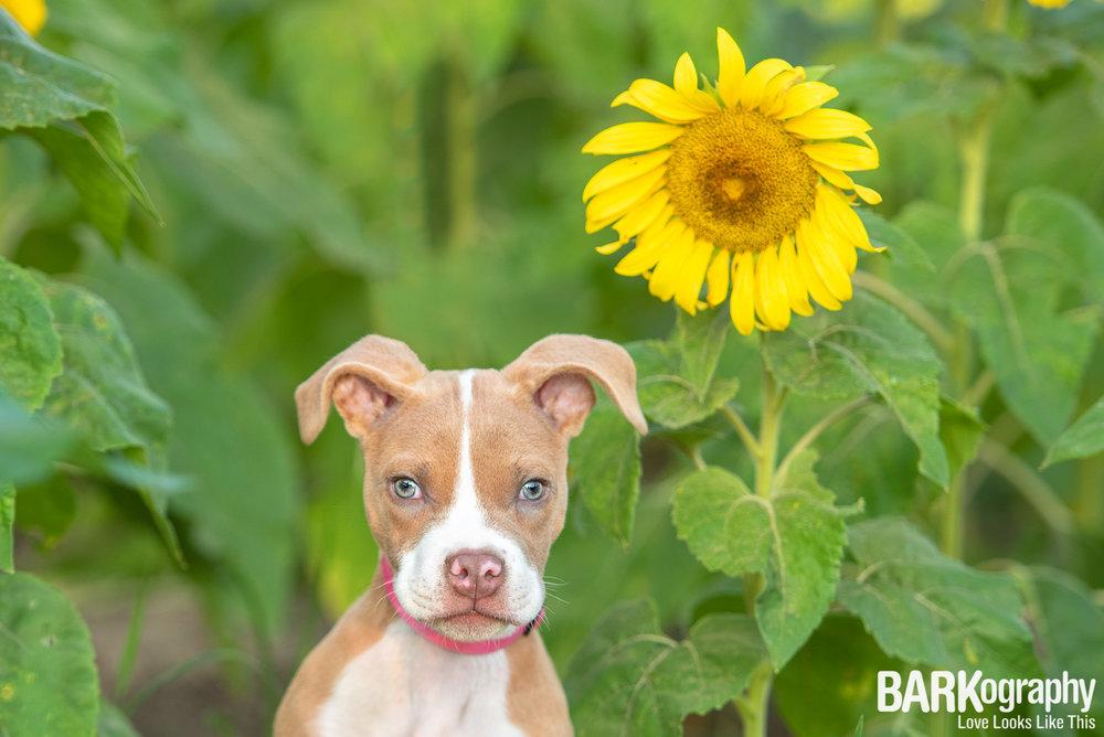 Charlotte puppy photo.JPG