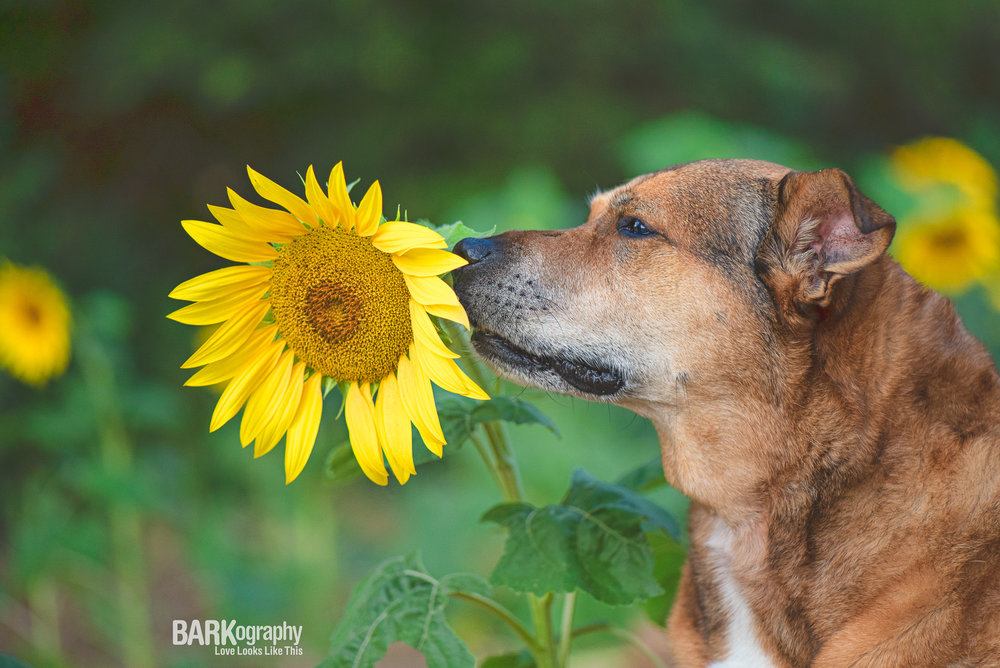 favorite dog photographer.JPG