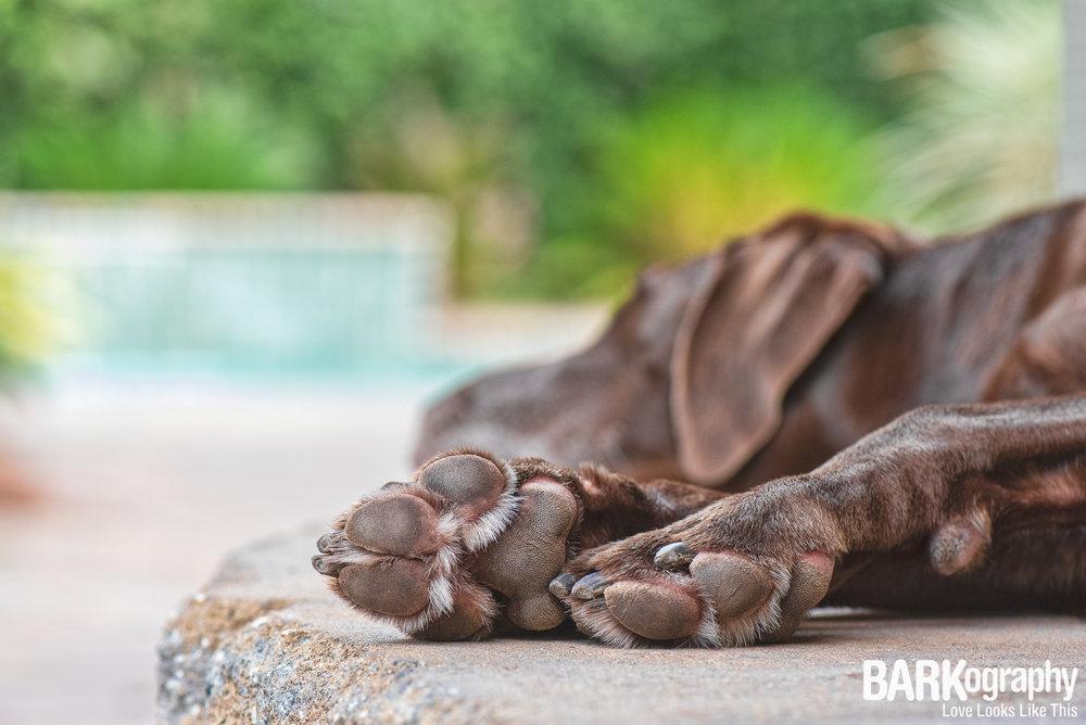 photographer's dog photo.JPG
