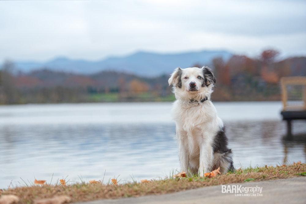 Dog Photography Asheville NC.JPG