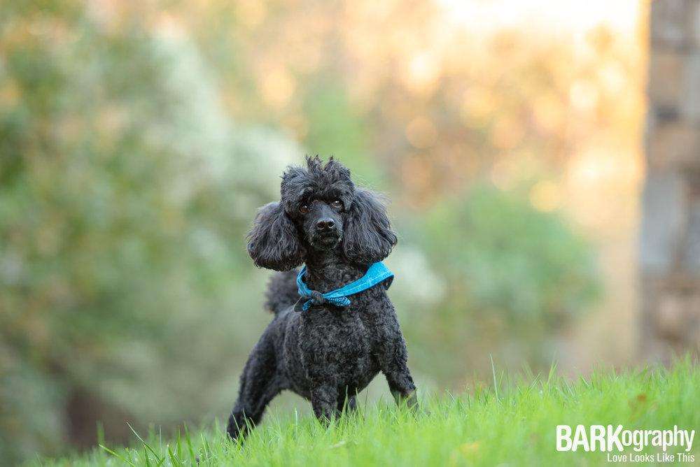 Waxhaw NC Dog Photo.JPG
