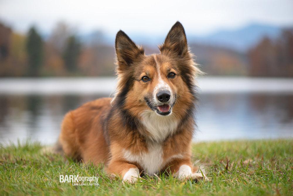 Visit Asheville NC Dog Photo.JPG