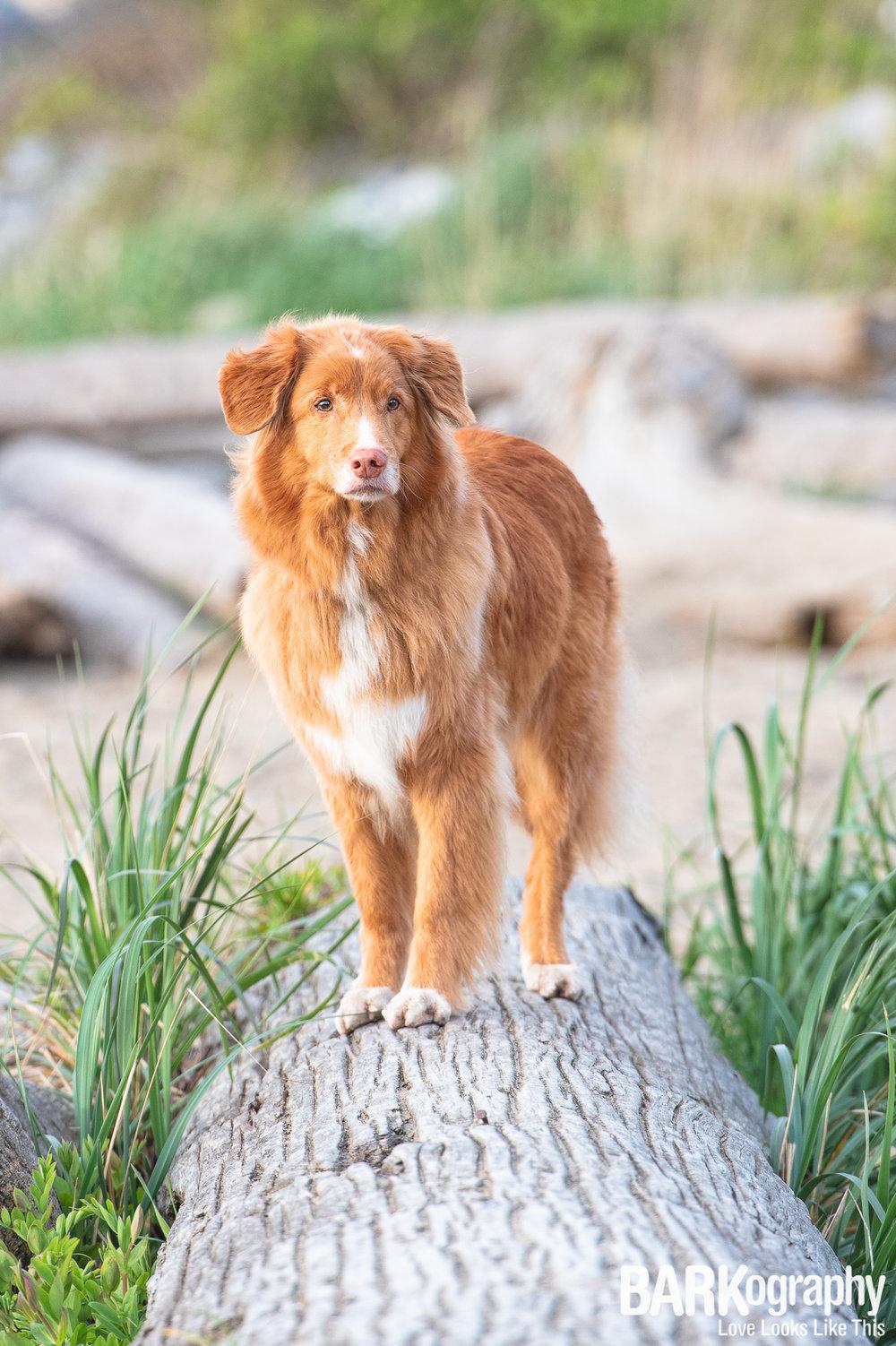 Kits Beach Dog Photography.JPG