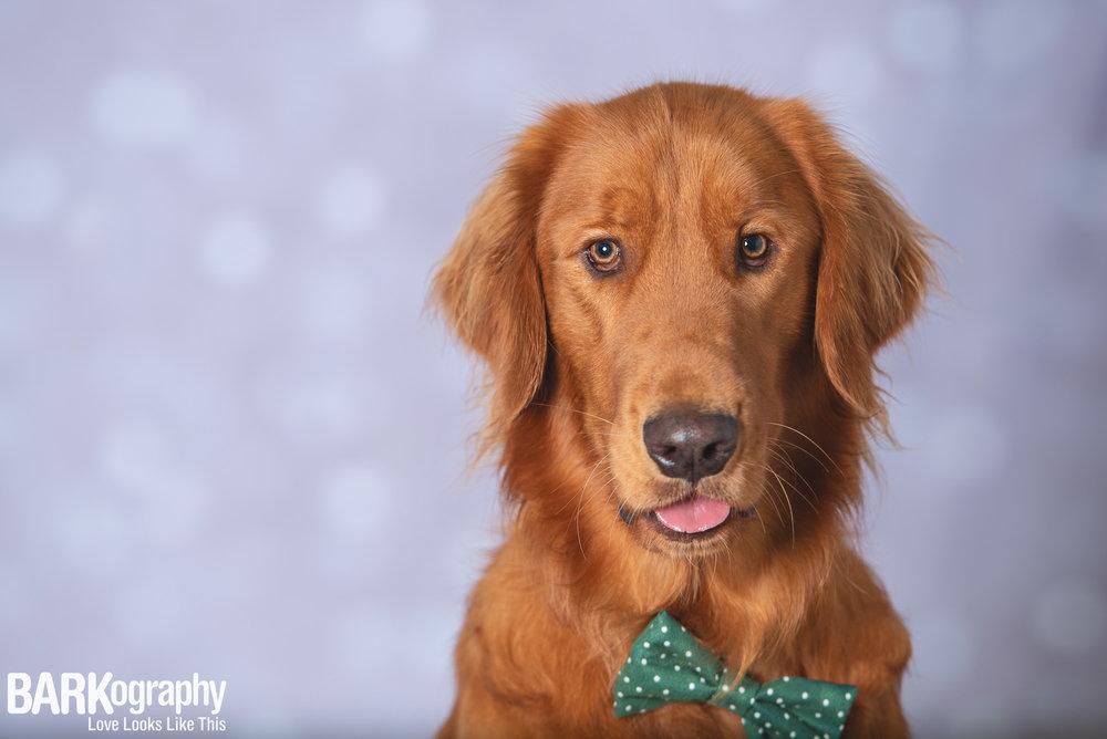 Holiday Dog Photography Charlotte NC.JPG
