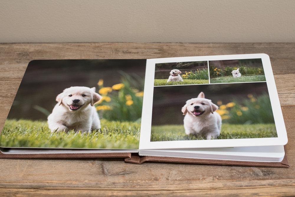 photo album of dogs.JPG