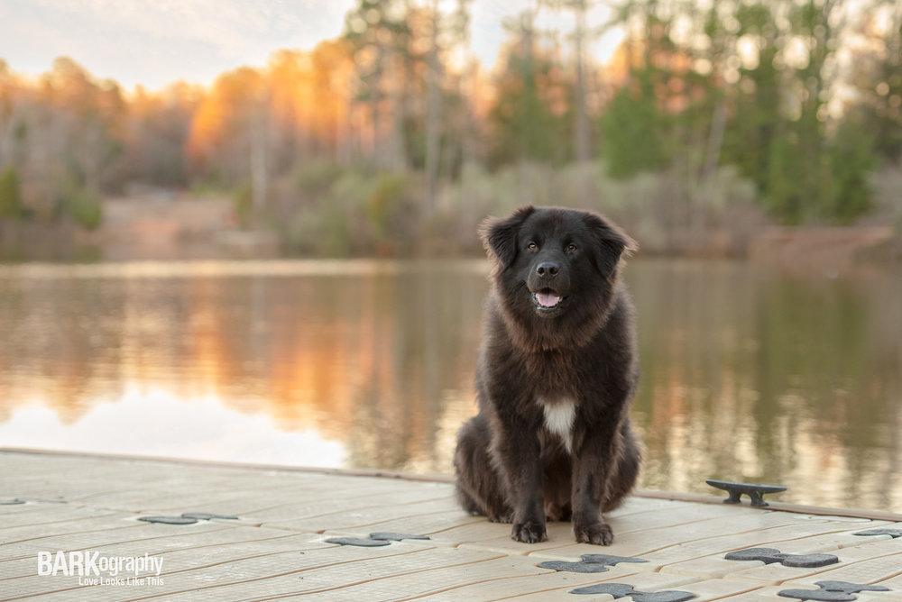 Black dog smiling picture sunset lake Charlotte NC