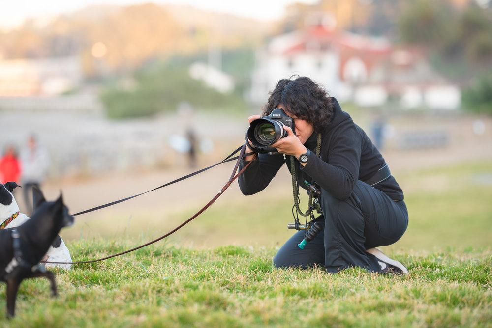 Dog photographer San Francisco