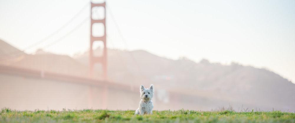 dog photo San Francisco Golden Gate Bridge