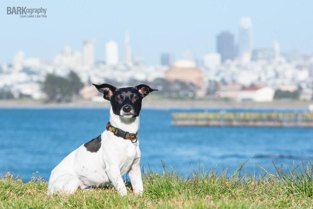 San Francisco Dog Photo