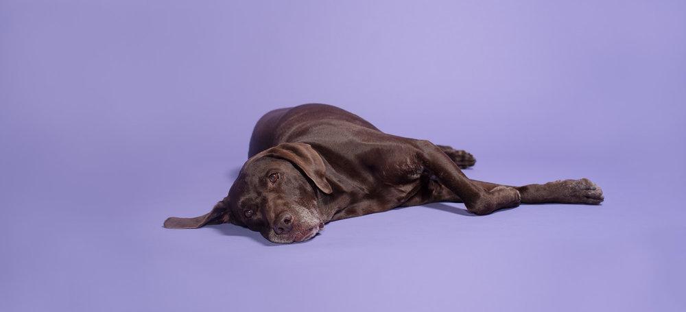 Dog picture studio Charlotte NC