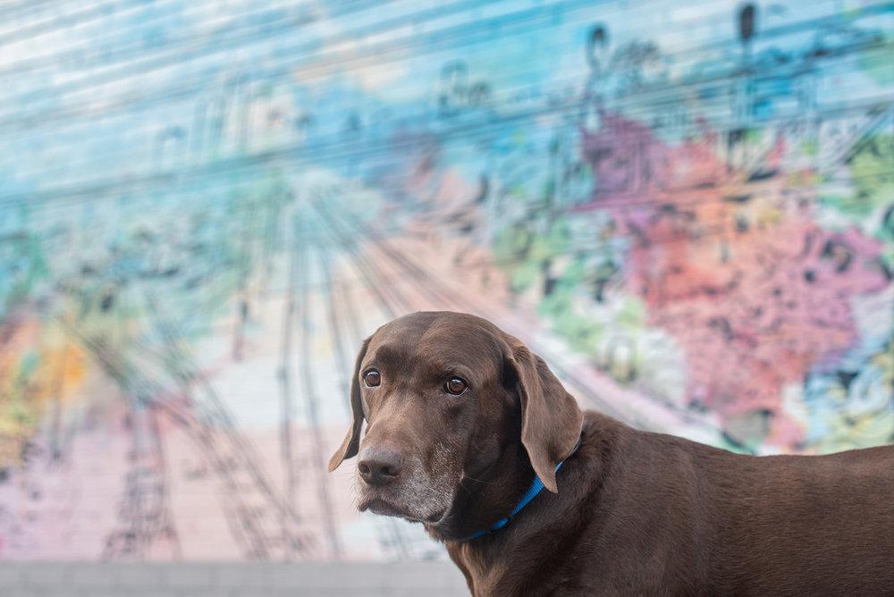SouthEnd Charlotte mural photo labrador retriever