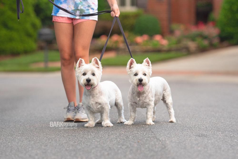 Southpark 28210 dog walking westies