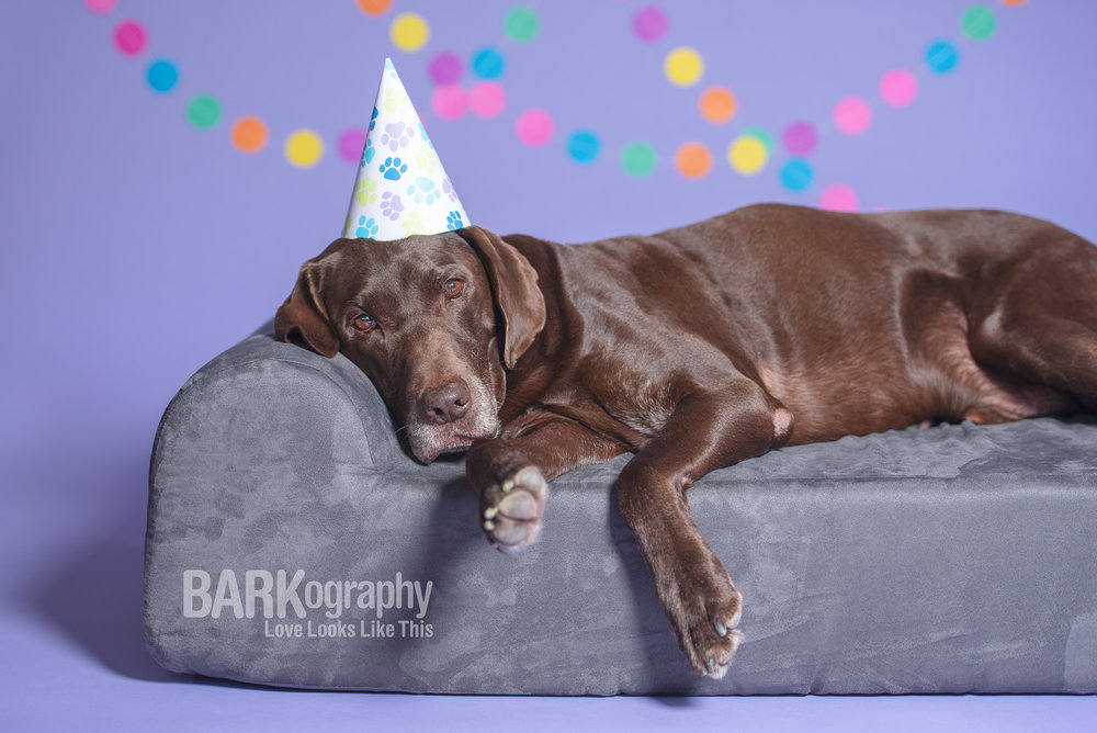 Moose has know idea at this point that he's about to get birthday cake!