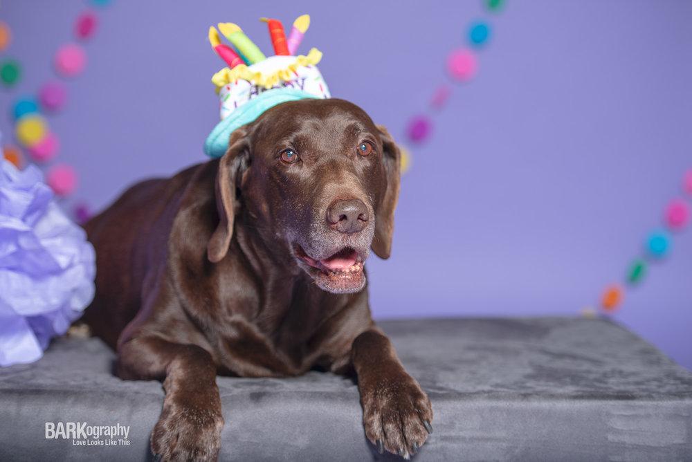 dog birthday hat party