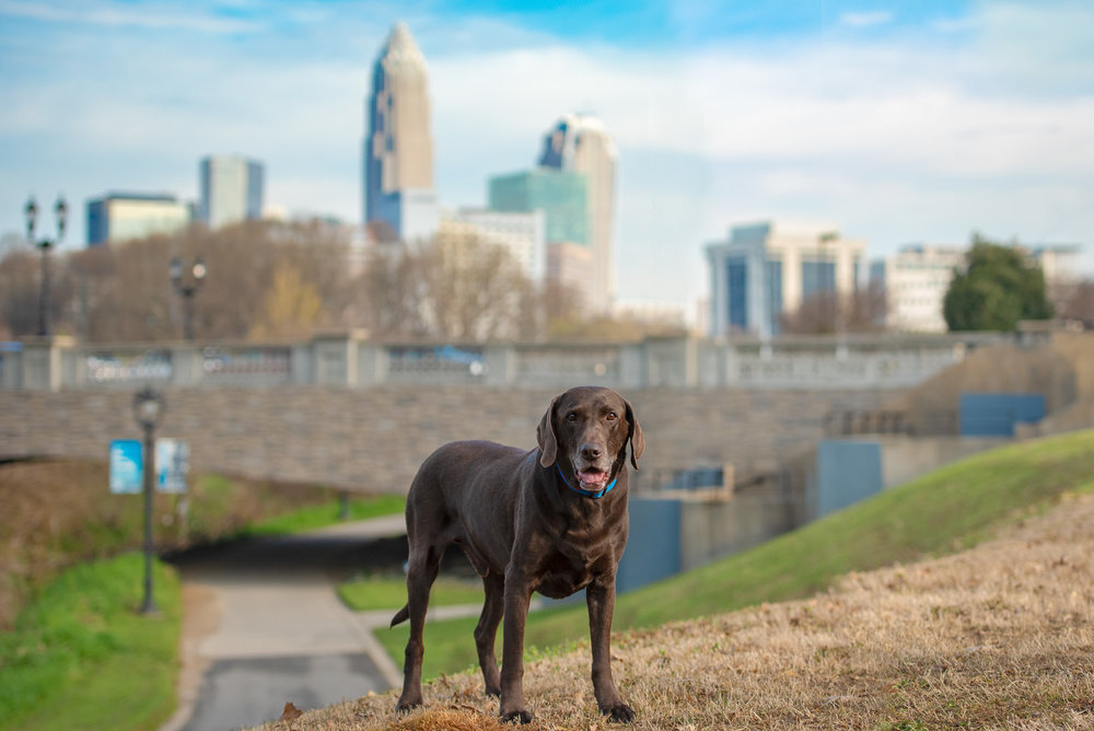 uptown Charlotte dog photography