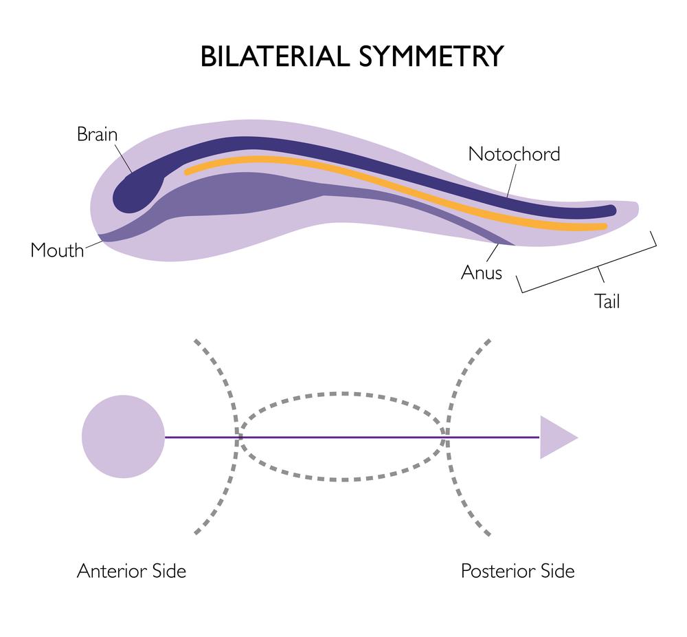 educational design symmetry-01.png