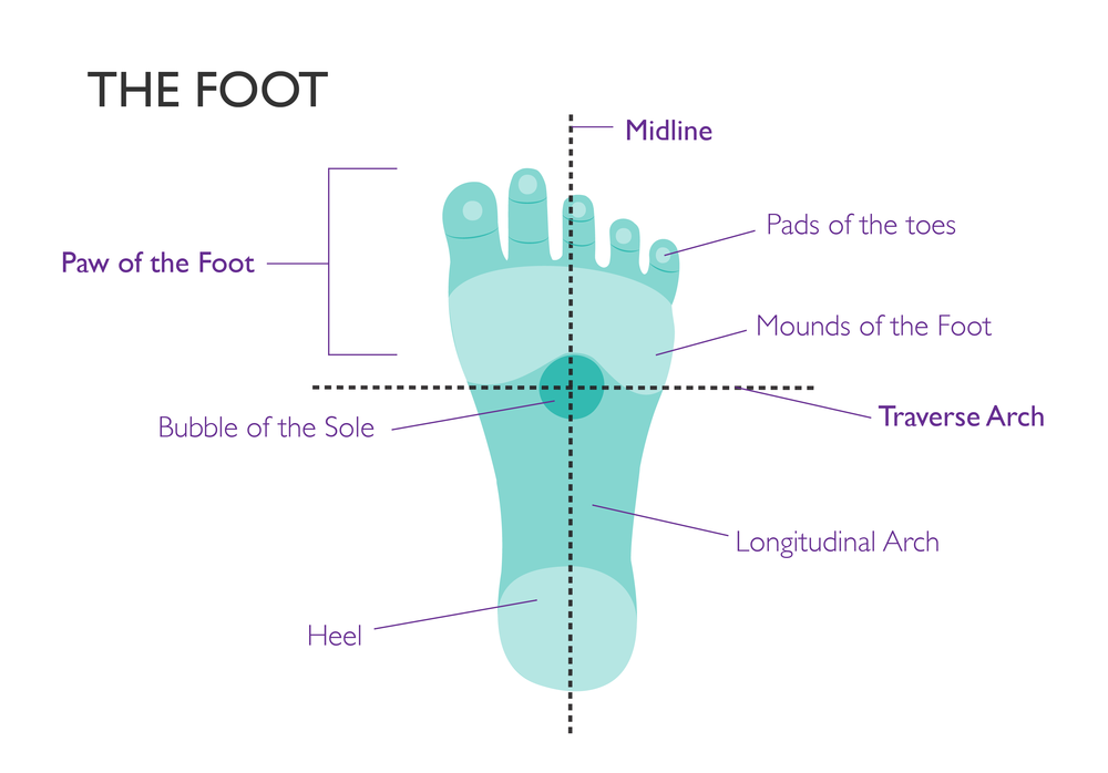 educational graphic design the foot-01.png