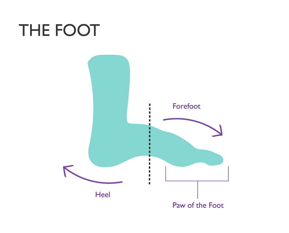 educational graphic design the foot-02.png