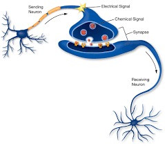 Shows chemical signals passing over synapses