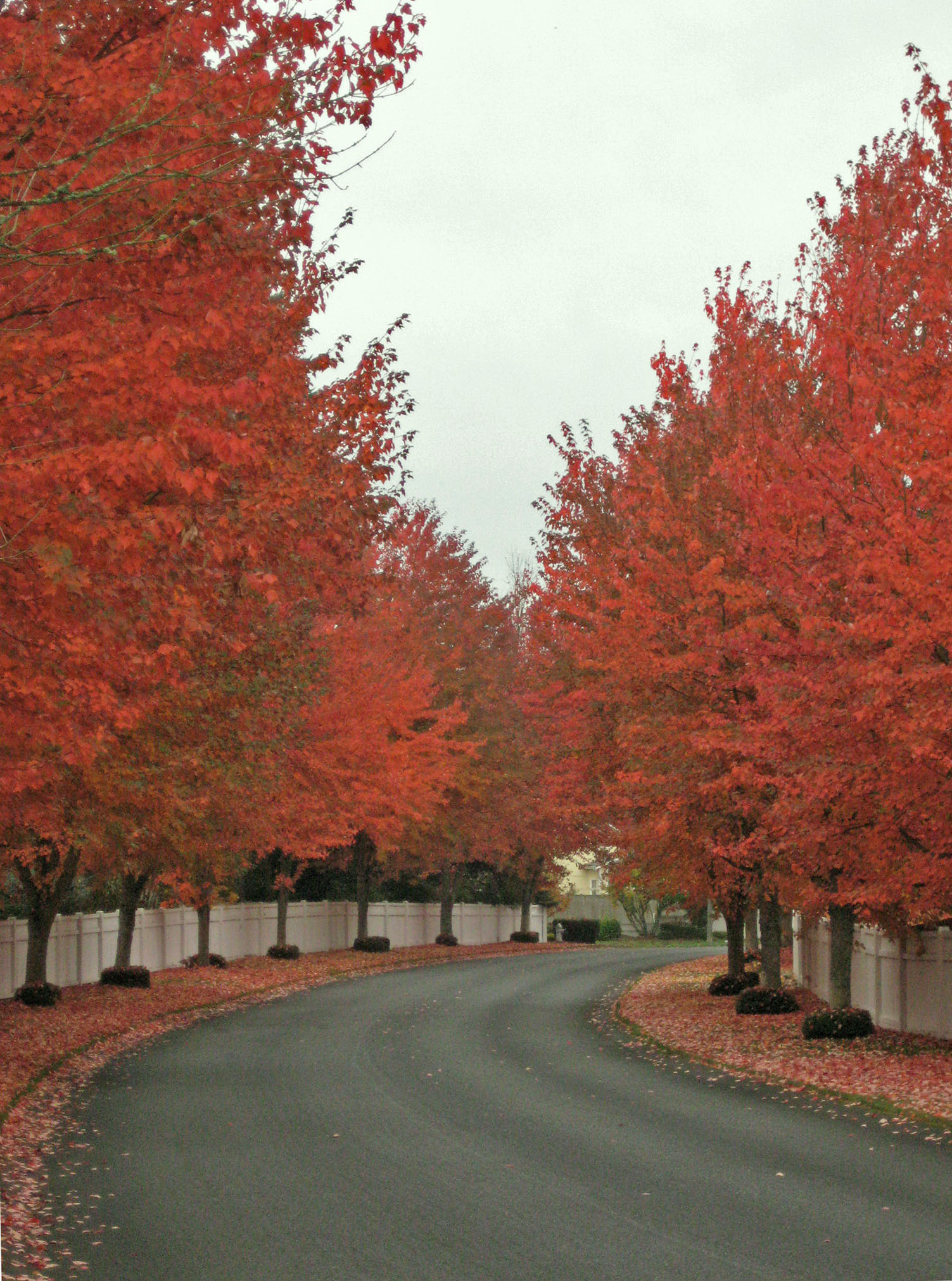 Fall Foliage in the Northwest